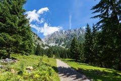 Montan@as austríacas Trayectoria con paisaje de la montaña del verano, montañas de Kaiser, Austria, el Tirol imagenes de archivo