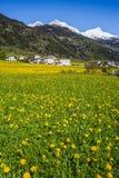 Montan@as de Suiza en resorte Foto de archivo libre de regalías