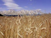 Montan@as devoluy del francés de los alpes del haute de la región del campo de maíz de Francia Imagen de archivo libre de regalías