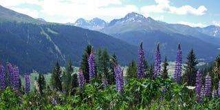 Montan@as suizas en verano Foto de archivo libre de regalías