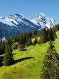 Montan@as suizas y prado verde Imagen de archivo libre de regalías