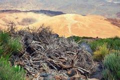 Montana Blanca i den Teide nationalparken, Tenerife, kanariefågel Fotografering för Bildbyråer