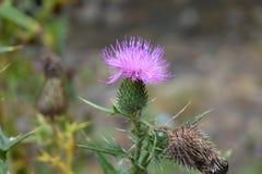 Montana Förenta staterna Royaltyfria Bilder