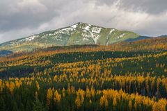 Montana Fall imagem de stock