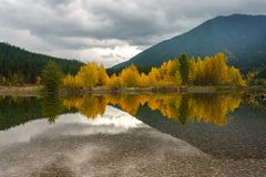 A Montana Fall. Autumn in Montana, Western United States Stock Photography