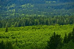 Montana Forest Landscape Stock Image