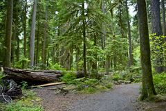 Montana Forest Royalty Free Stock Images