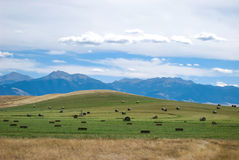 Montana hay field. A Montana hay field with the Rocky Mountains in the background Stock Images