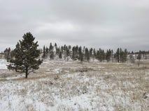 Montana Landscape fotos de stock royalty free