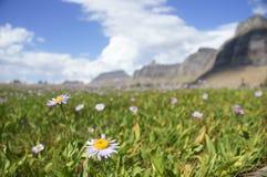 Montana Landscape II Stock Image