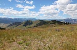 Montana Landscapes con i fiori selvaggi Immagini Stock