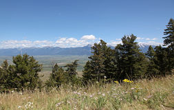 Montana Landscapes mit wilden Blumen Lizenzfreies Stockfoto