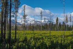 Montana Mountain äng Arkivfoton