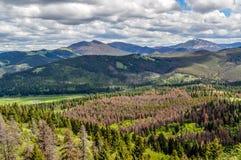 Montana Mountain Scene Near Helena boscoso imágenes de archivo libres de regalías