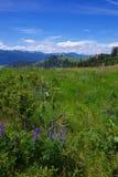 Montana Mountains Royalty Free Stock Photography