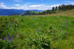 Montana Mountains. Mountains and prairie land near the National Bison Range in Montana Stock Photography