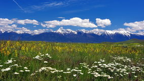 Montana mountains and wildflowers. View from the National Bison Range, Montana Royalty Free Stock Photography