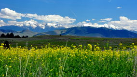Montana mountains and wildflowers Royalty Free Stock Photos