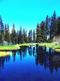 Montana Reflections of the past. Montana streams reflecting the trees through the waters of my past Royalty Free Stock Photo