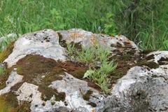 Montana Rock Stock Photo
