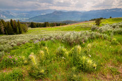 Montana Scenery Royalty Free Stock Image