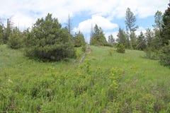 Montana Spring Royaltyfri Foto