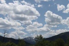 Montana Spring Arkivfoto