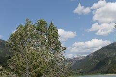 Montana Spring Royalty Free Stock Photo