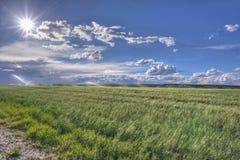 Montana Wheat Field Lizenzfreie Stockfotos