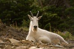 Montana-wild lebende Tiere stockfotos