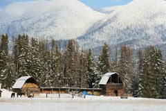 Montana winter. Landscape with barns and horses Royalty Free Stock Image