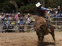 Montando a Bull Imagens de Stock