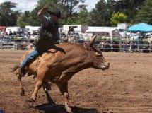 Montando a Bull Fotografia de Stock Royalty Free