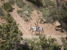 Montando en Bryce Canyon National Park, Utah, los E.E.U.U. Fotografía de archivo