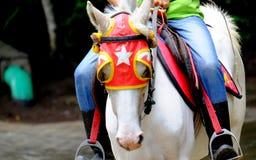 Montando um cavalo Fotos de Stock
