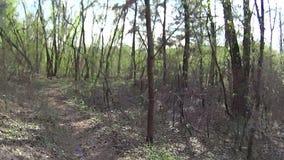 Montando um Mountain bike em uma floresta video estoque