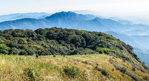 Montane forest at Kew Mae Pan Nature trail Stock Image
