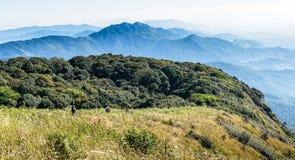 Montane skog på den Kew Mae Pan Nature slingan Fotografering för Bildbyråer