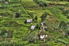 Montanhês com os terraços em Madeira. Imagem de Stock