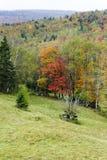 Montanhês que inclina-se à floresta Fotos de Stock