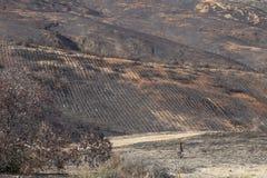Montanhês queimado Imagem de Stock