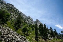 Montanha alta, floresta e céu Fotos de Stock