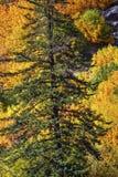 Montanha amarela Stevens Pass Washington das cores verdes da queda imagens de stock royalty free