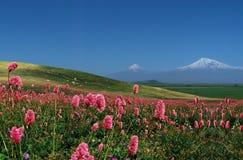 Montanha Ararat. imagem de stock
