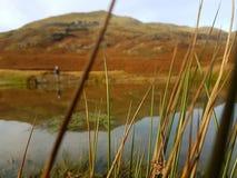 Montanha através da grama Fotografia de Stock