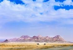 Montanha & camelo fotografia de stock
