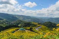 Montanha coberta pelo girassol mexicano imagens de stock