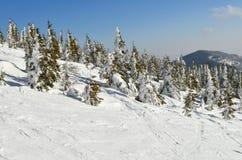 Montanha coberto de neve com as árvores que crescem nela Área do esqui imagens de stock