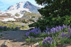 Montanha coberto de neve, flores e pinheiros Foto de Stock Royalty Free