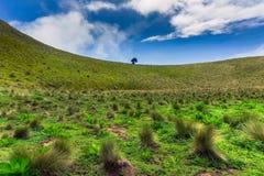 Montanha com árvore de grama e fundo do céu Imagens de Stock